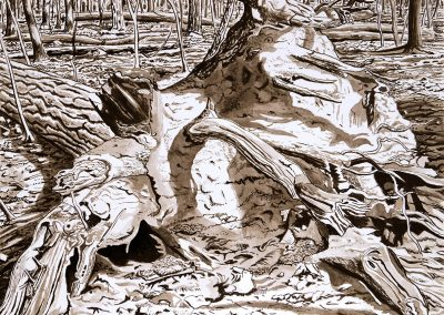 Wurzel eines liegenden Baumes